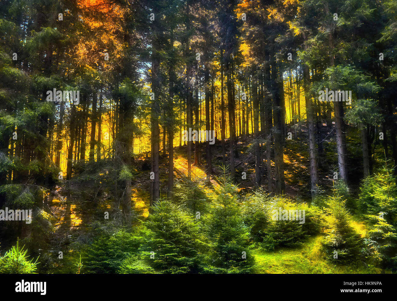 the light can be so special deep in the forest. shot during a trip in romanian virgin forest of fagaras mountains - Stock Image