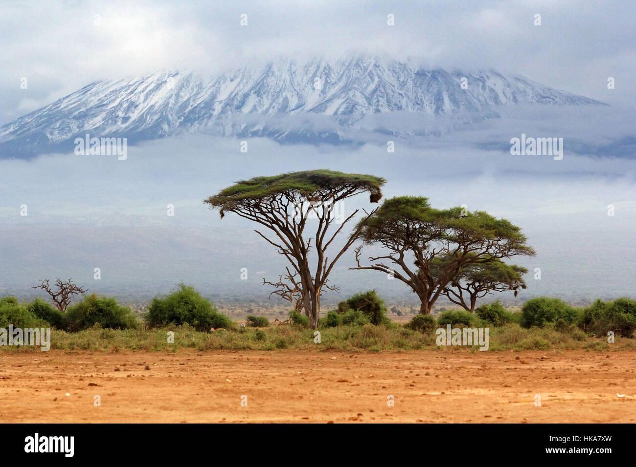 Mount Kilimanjaro, Kenia, the highest mountain in Africa. - Stock Image