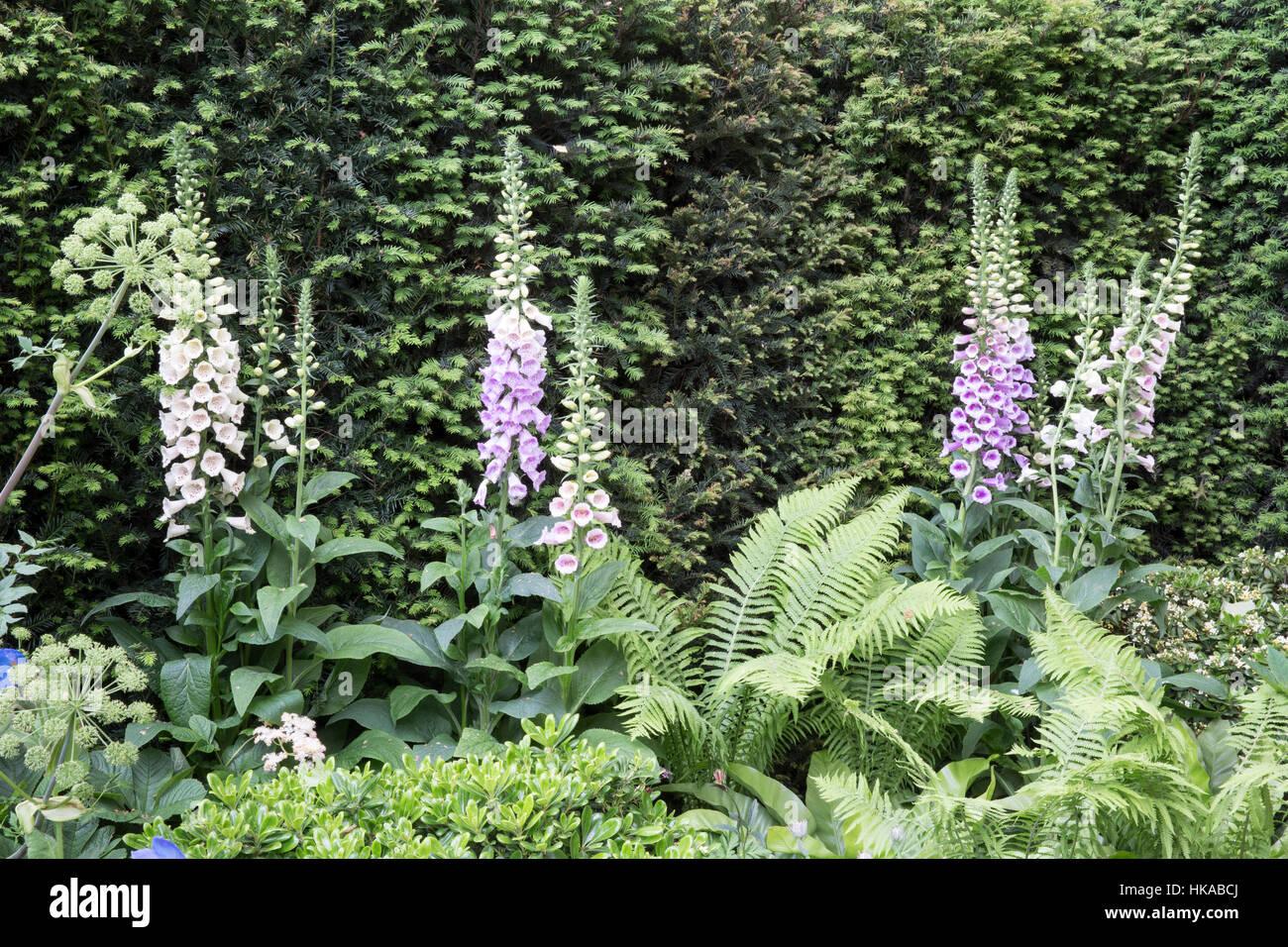 The Husqvarna Garden, Chelsea Flower Show 2016, London UK Designer: Charlie Albone - Stock Image