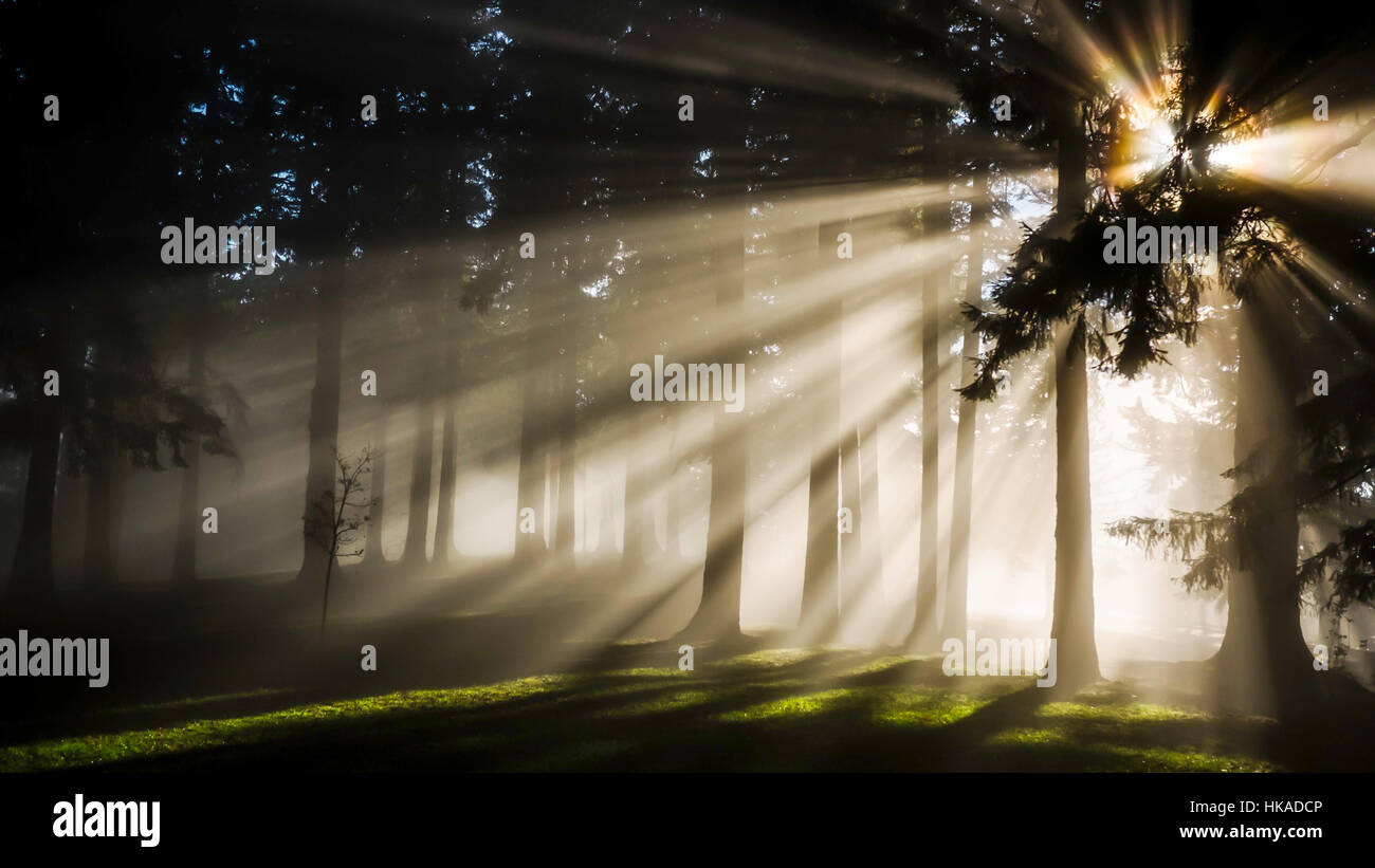 Super cool effect in the forest - Stock Image