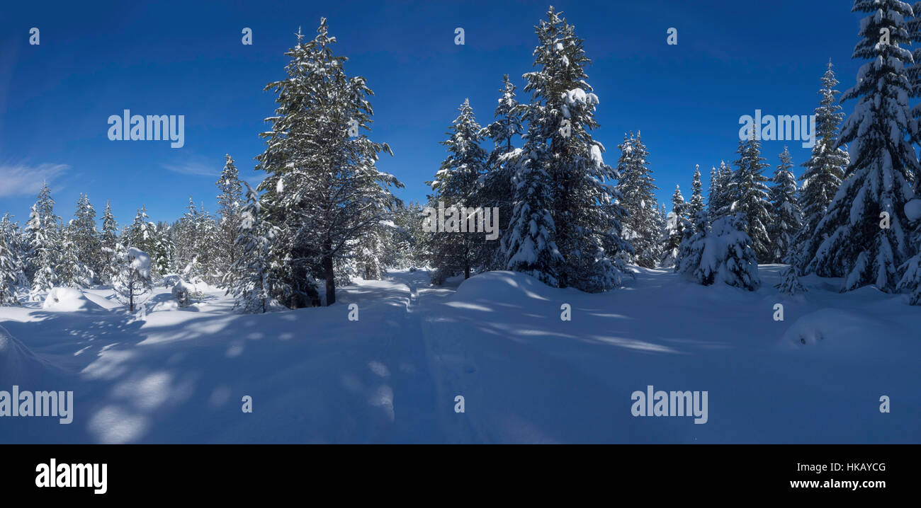 Maxwell Sno-Park near Santiam Pass in the Cascade Mountains of Oregon, U.S.A. - Stock Image