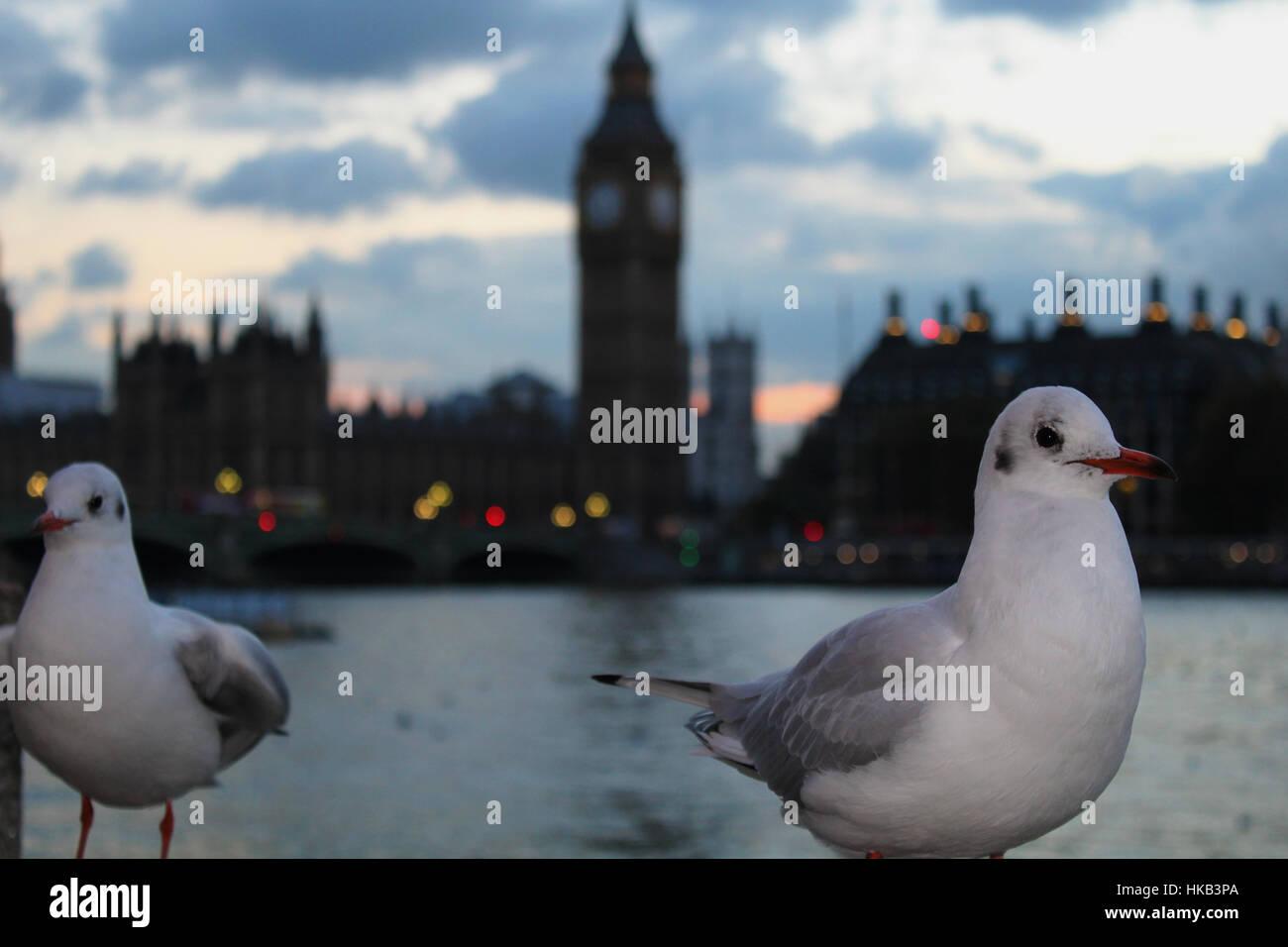 South Bank Birds - Stock Image