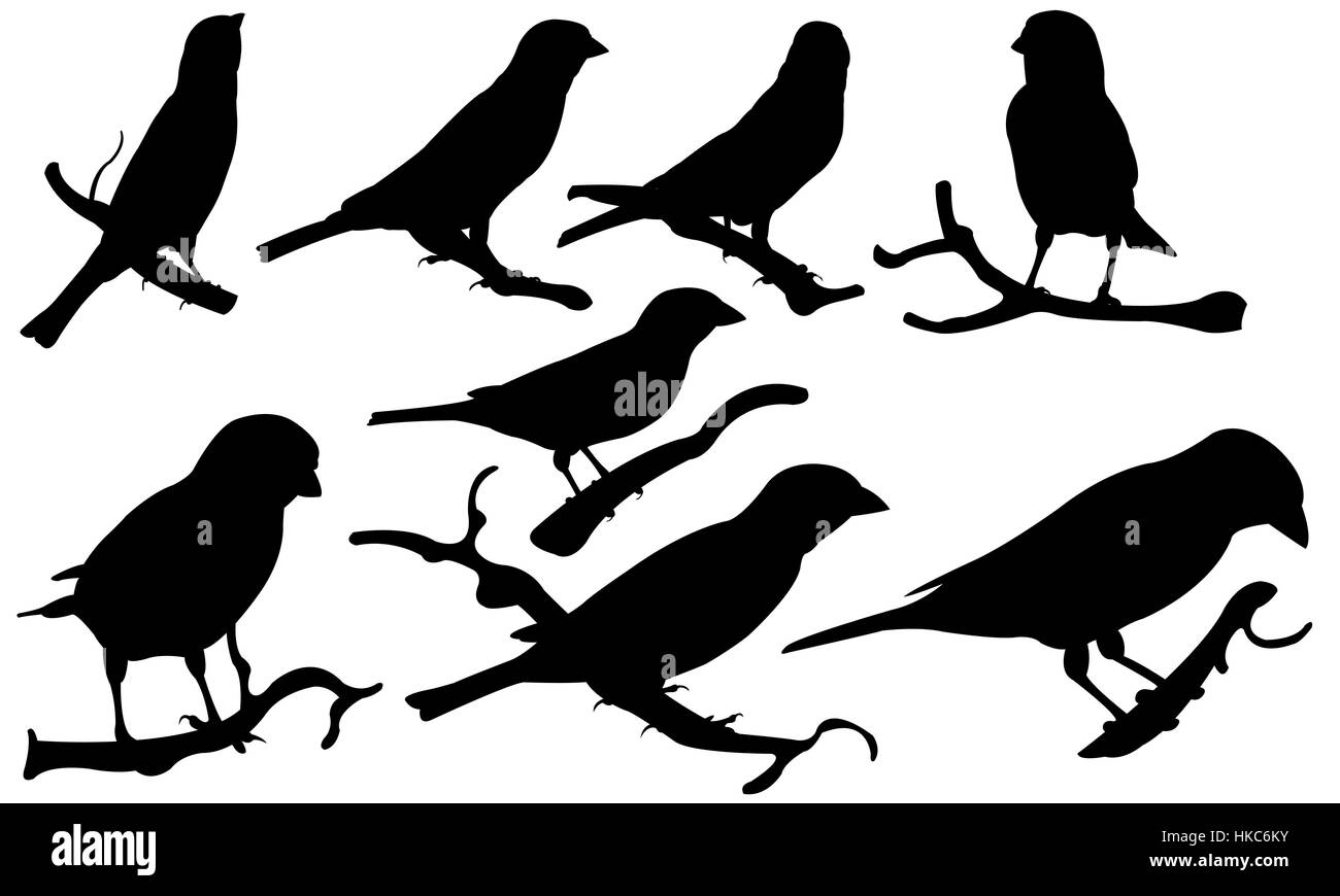 Set of sparrows on branches isolated - Stock Image
