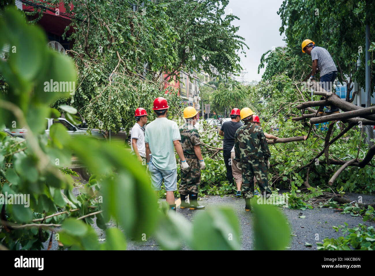 A few hours after super typhoon Merapi passed through Xiamen, it generated mass damage throughout the city; Xiamen, - Stock Image