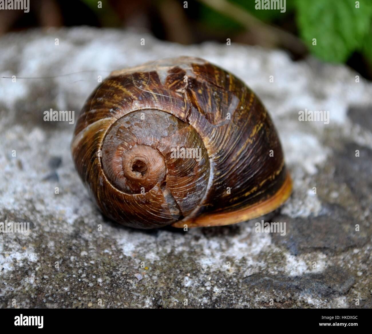 Close up broken snail shell - Stock Image
