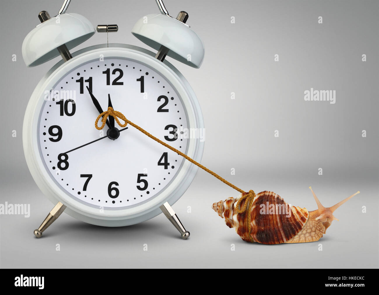 Snail pulling clock, time management concept - Stock Image