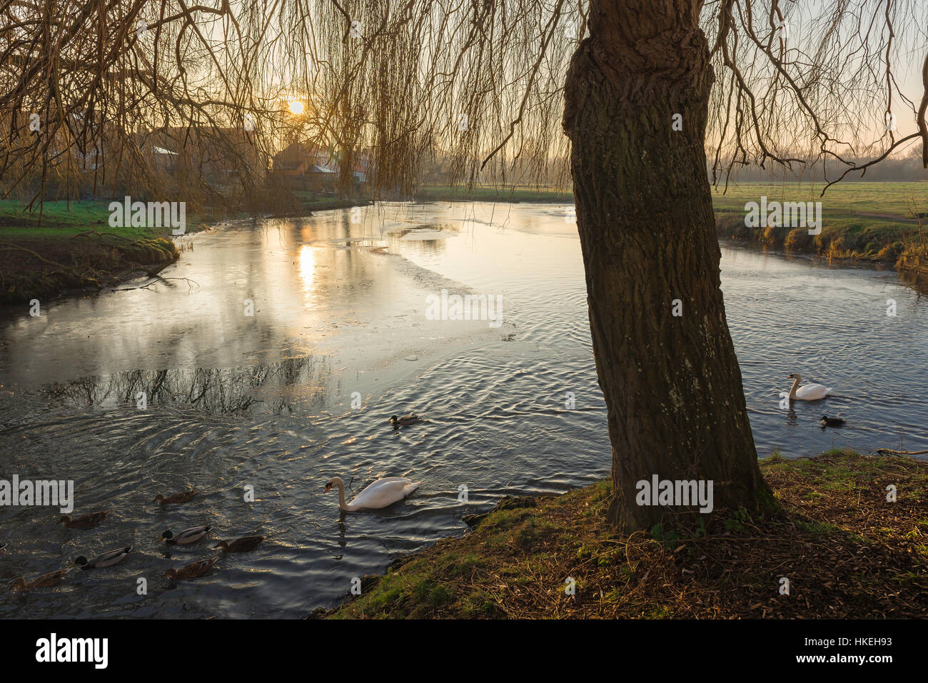View of the River Stour in winter surrounded by a water meadow near the town of Sudbury in Suffolk, Babergh district, - Stock Image