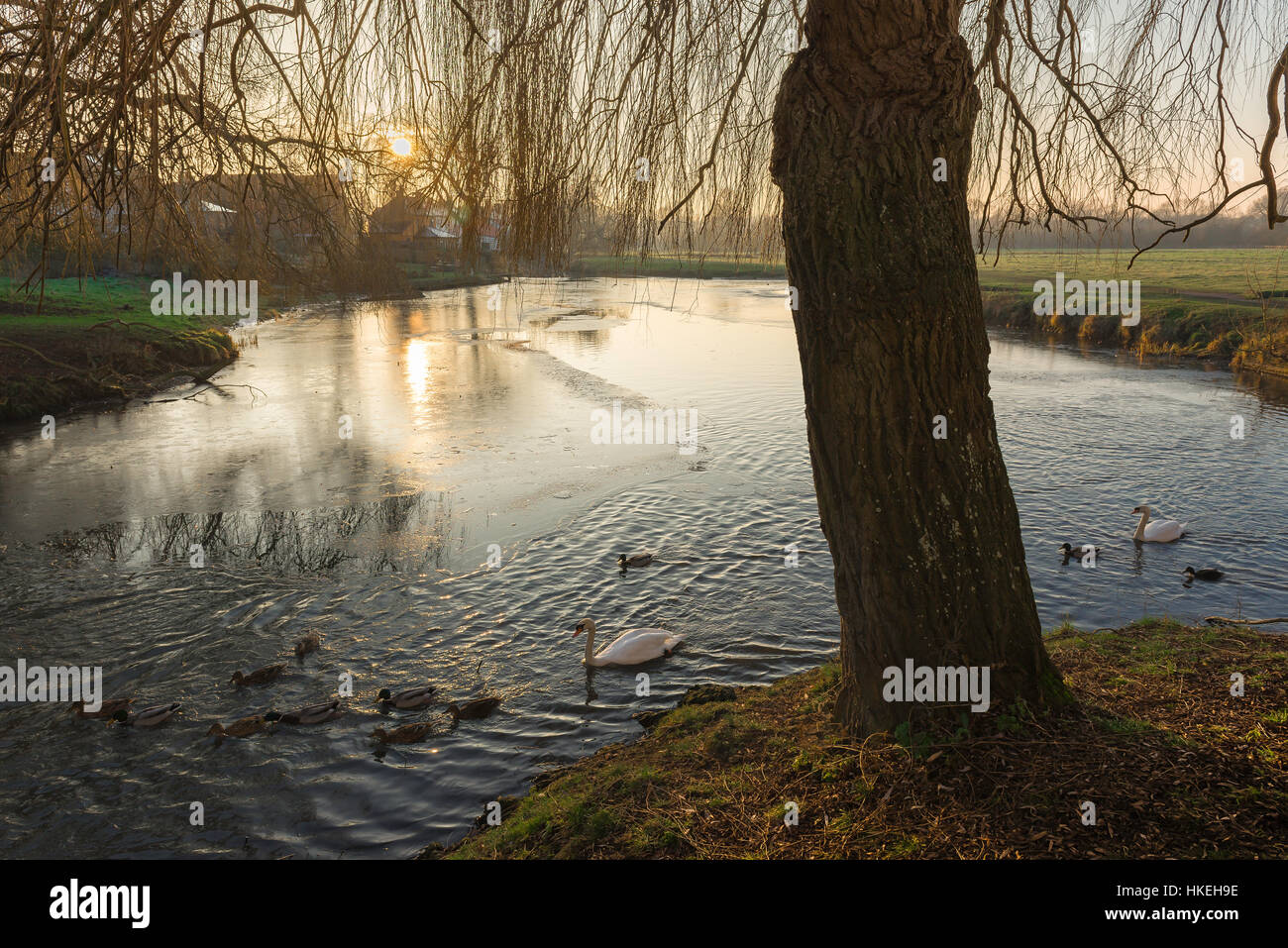 Sudbury Suffolk, winter view of the River Stour surrounded by a water meadow near  the town of Sudbury in Suffolk, - Stock Image