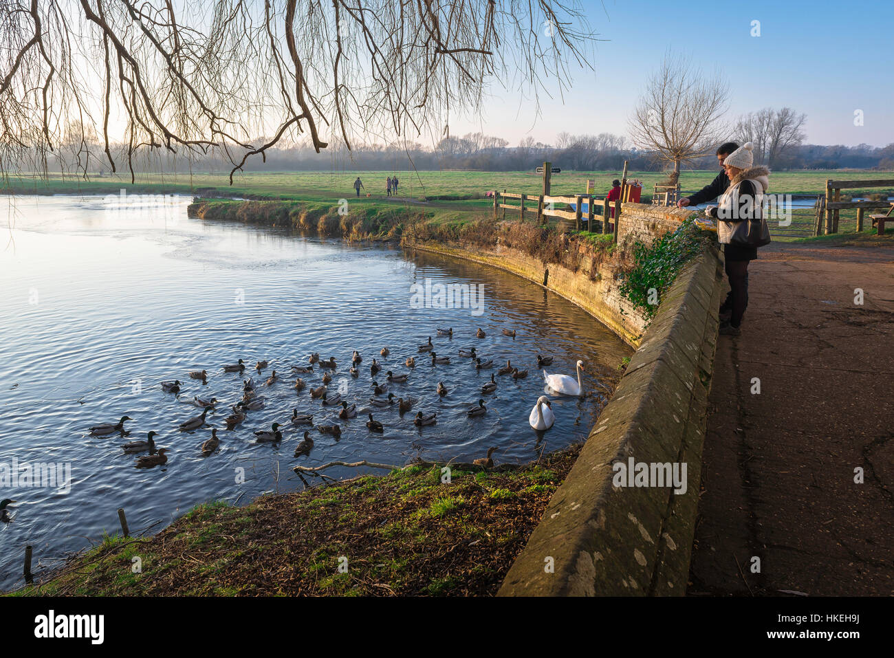 Sudbury Suffolk, a young couple feed ducks along the River Stour in Sudbury town, Suffolk, Babergh district, UK. - Stock Image