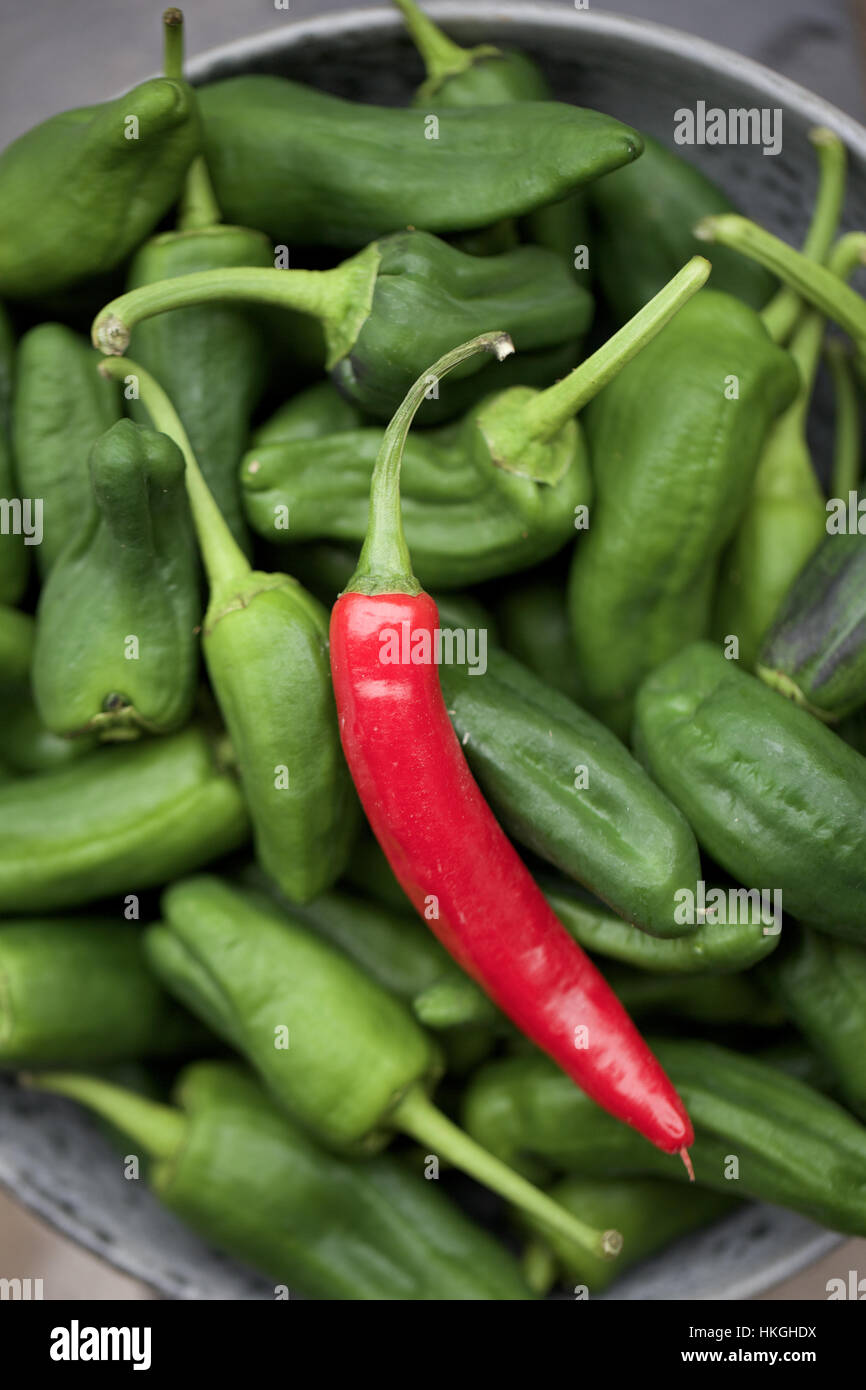 bowl of padron pepper. chilli pepper, spicy, raw, food. - Stock Image