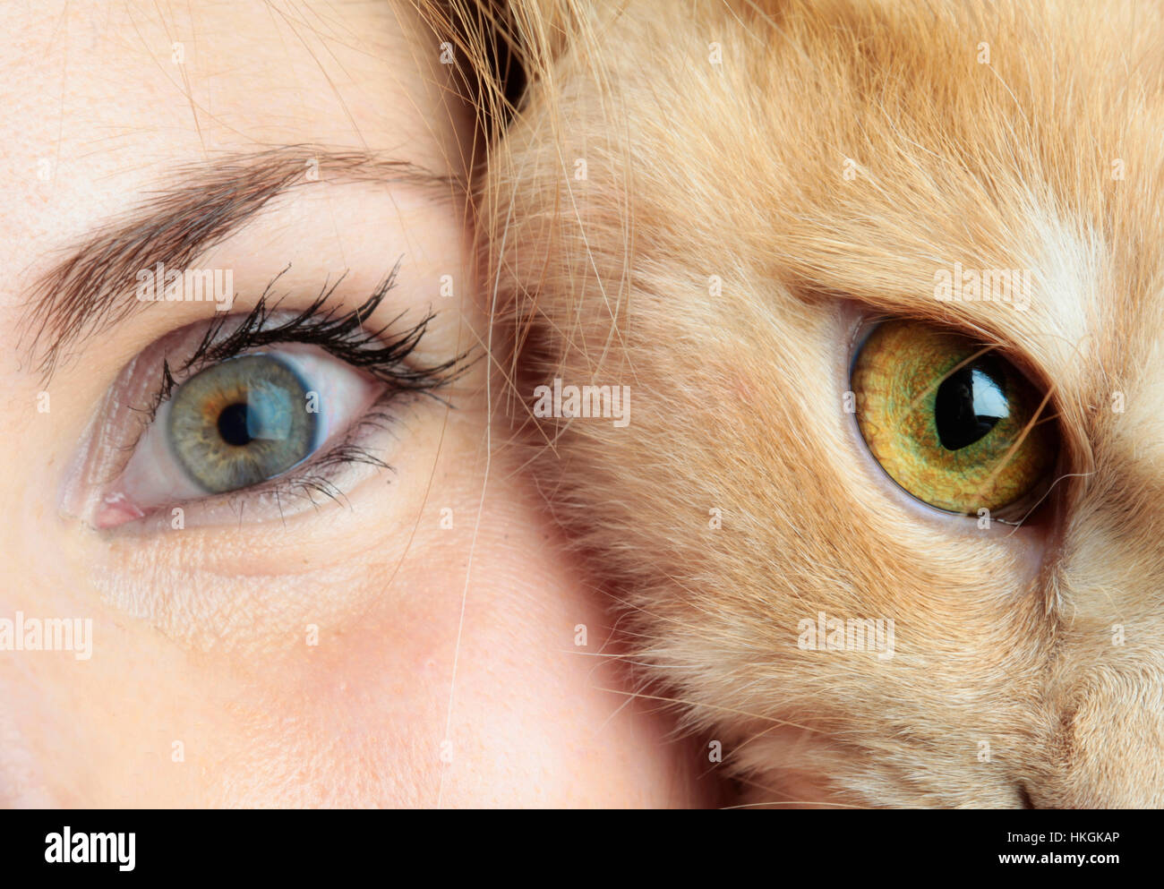 Human face with cat face together in studio - Stock Image