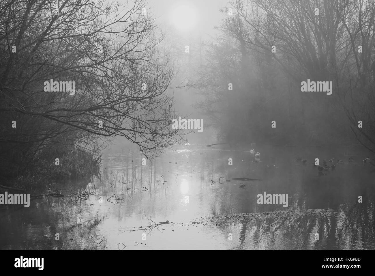 Fog swirls over a the surface of lake and between bare trees - Stock Image