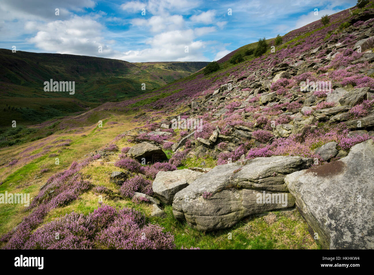 Summer at Crowden in North Derbyshire. Purple heather blooming around rocks in this dramatic and rugged landscape. - Stock Image
