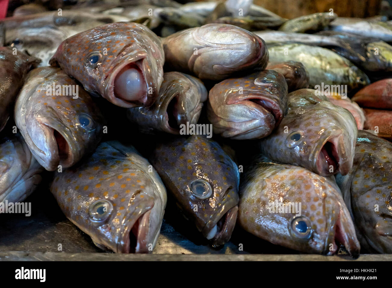 Thailand food market stock photos thailand food market for Daily fresh fish
