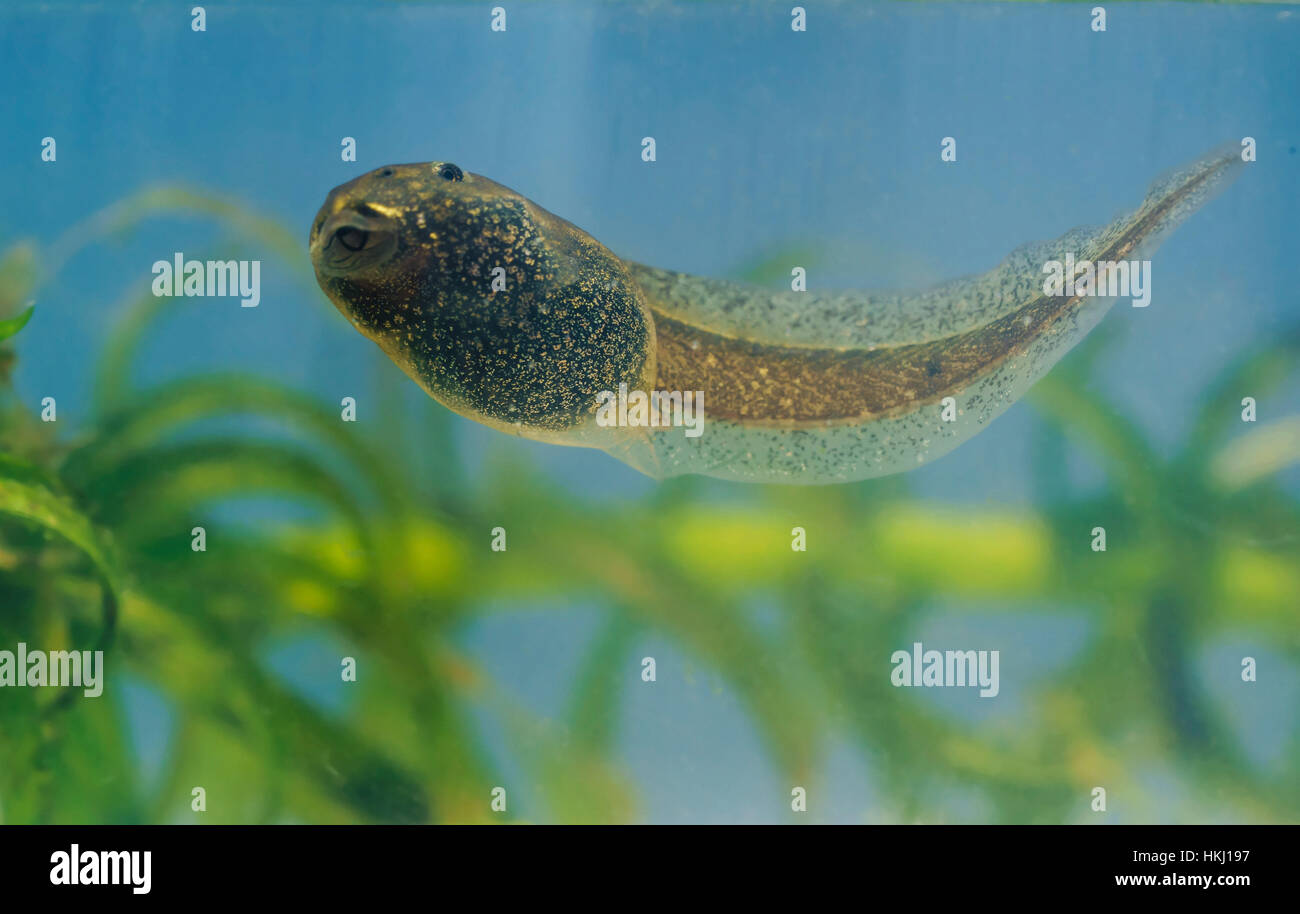 Fish Lips Stock Photos & Fish Lips Stock Images - Alamy