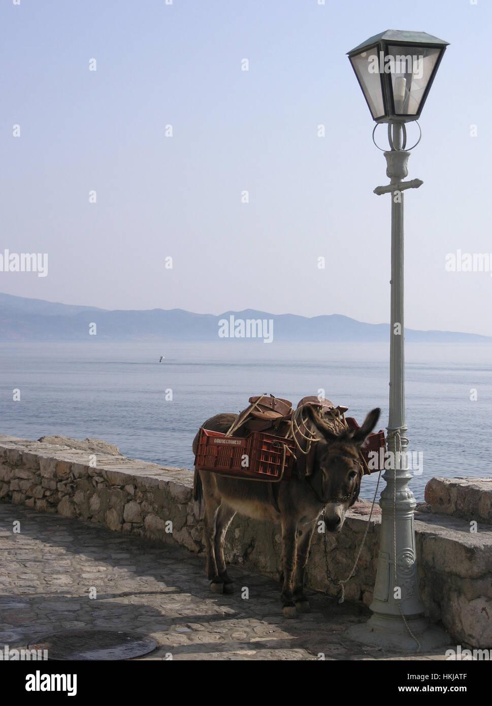 Greece donkey tied to a lantern Hydra Saronic island Greece - Stock Image