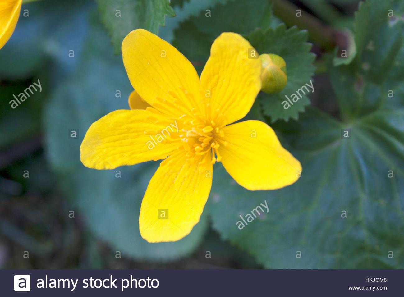 White flower five petals yellow stock photos white flower five yellow flower with five petals stock image mightylinksfo