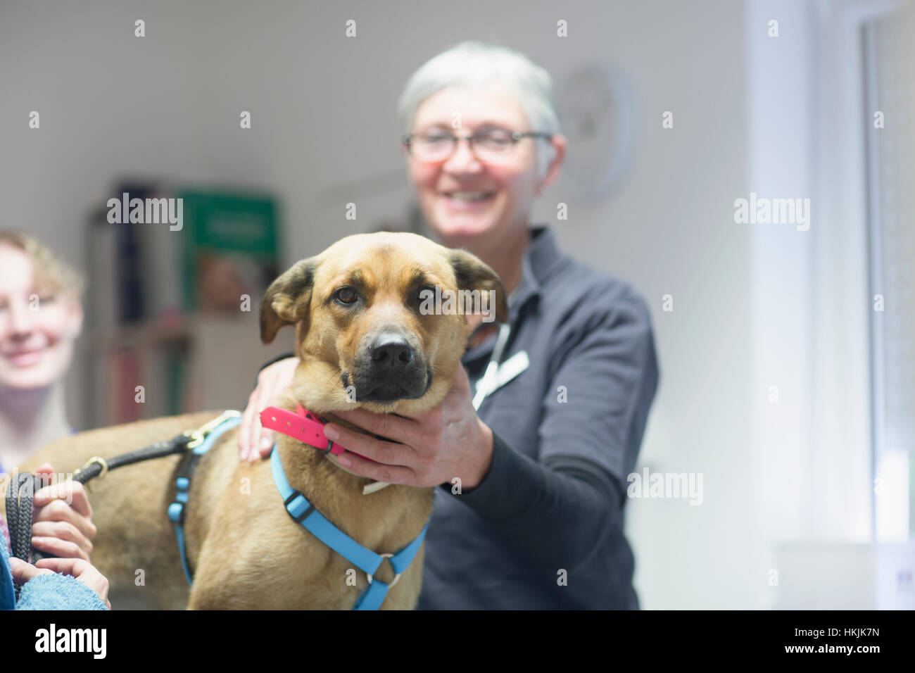 Veterinarian doing a check-up on a dog,Breisach,Baden-Württemberg,Germany - Stock Image