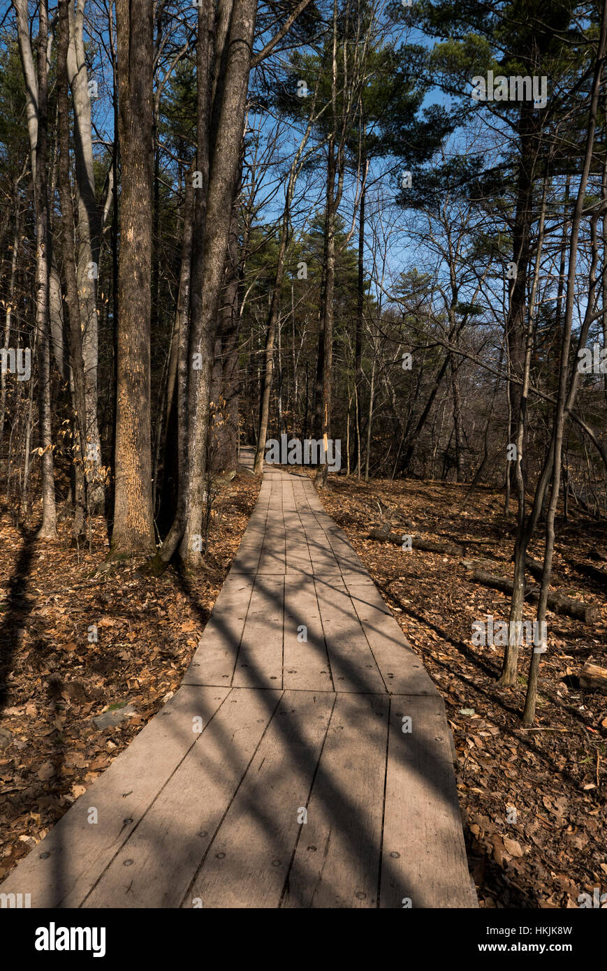 Boardwalk trail through woods. - Stock Image