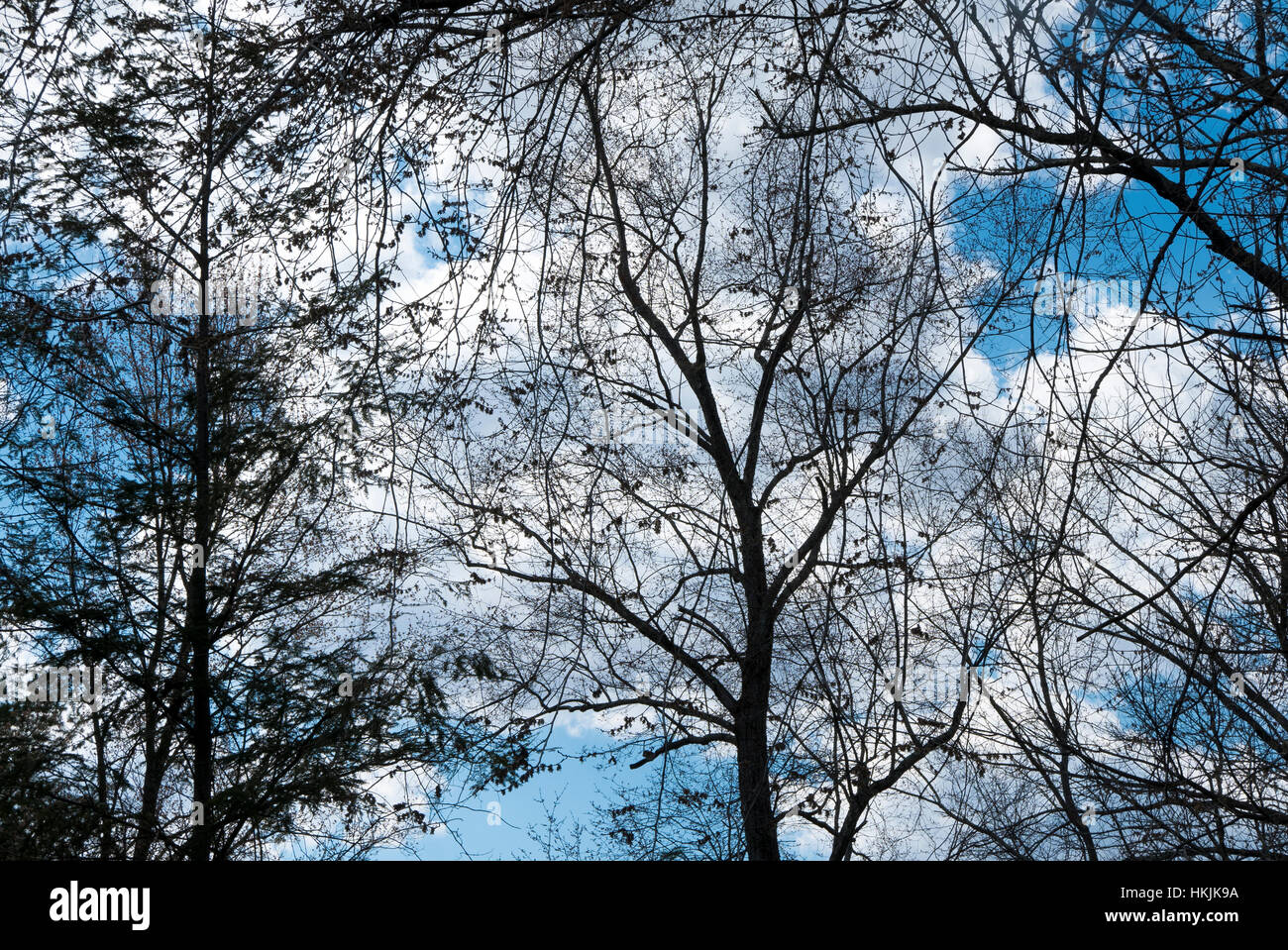 Trees, clouds, sky. - Stock Image