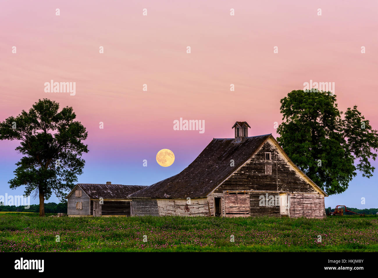 Full moon over abandoned farmstead with clover flowers in foreground. - Stock Image