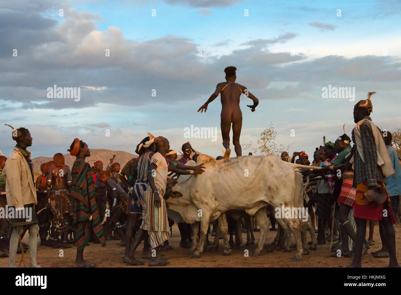 Cow Jumping Stock Photos & Cow Jumping Stock Images - Alamy