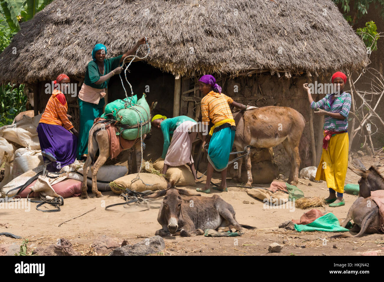 People unloading donkeys in the village, Ethiopia - Stock Image