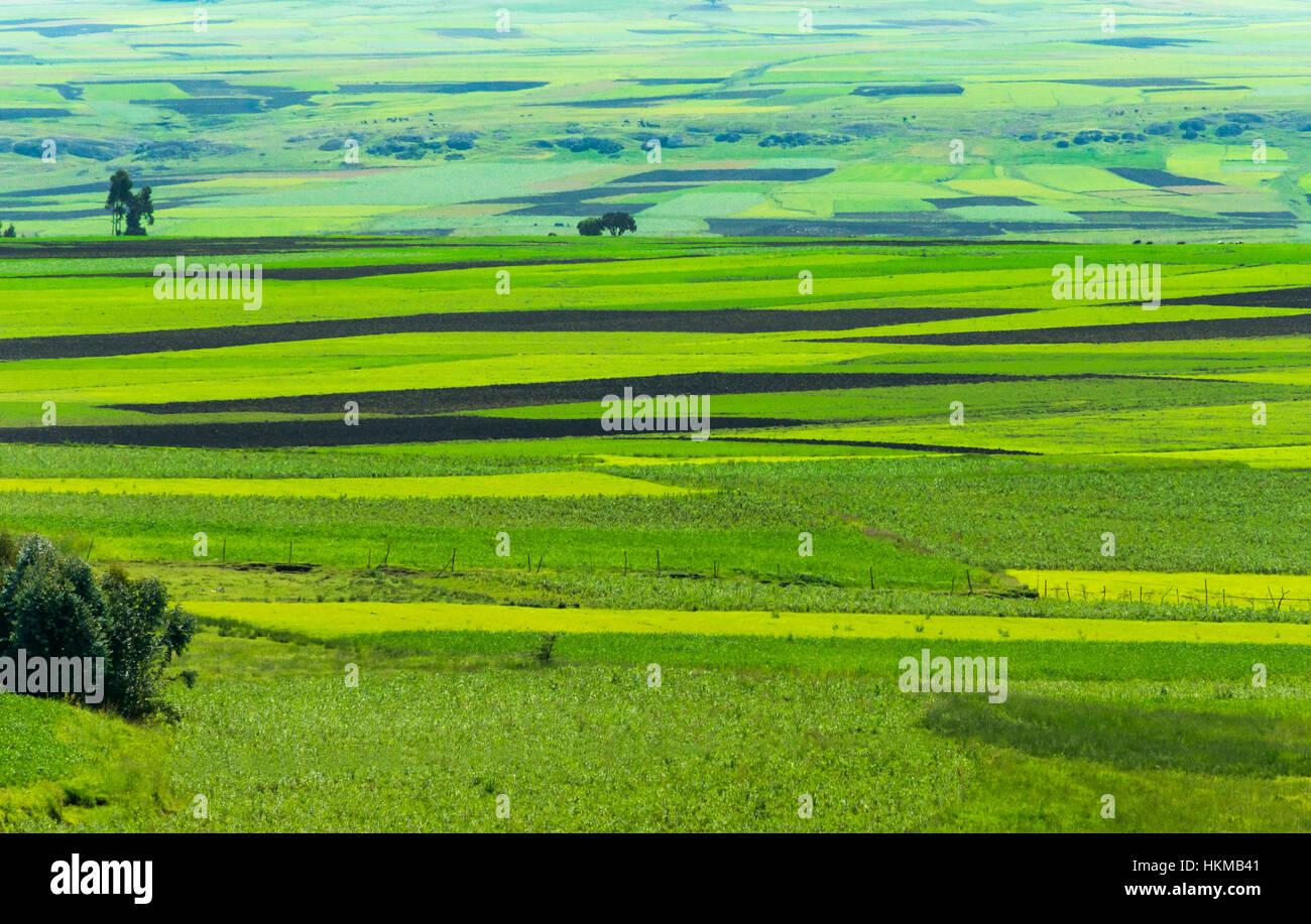 Pasture, Bahir Dar, Ethiopia - Stock Image