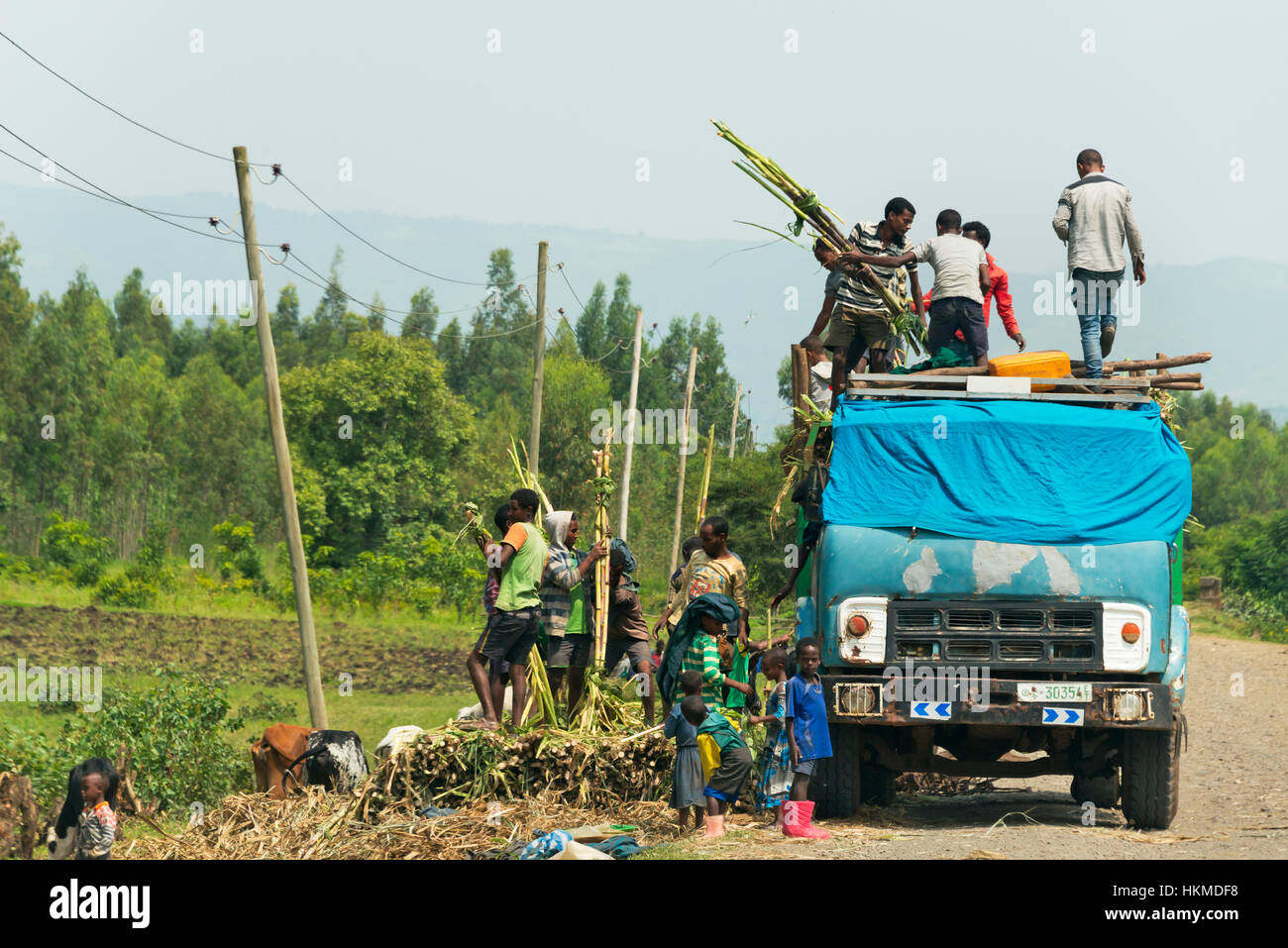 Loading harvested sugarcane onto the truck, Bahir Dar, Ethiopia - Stock Image