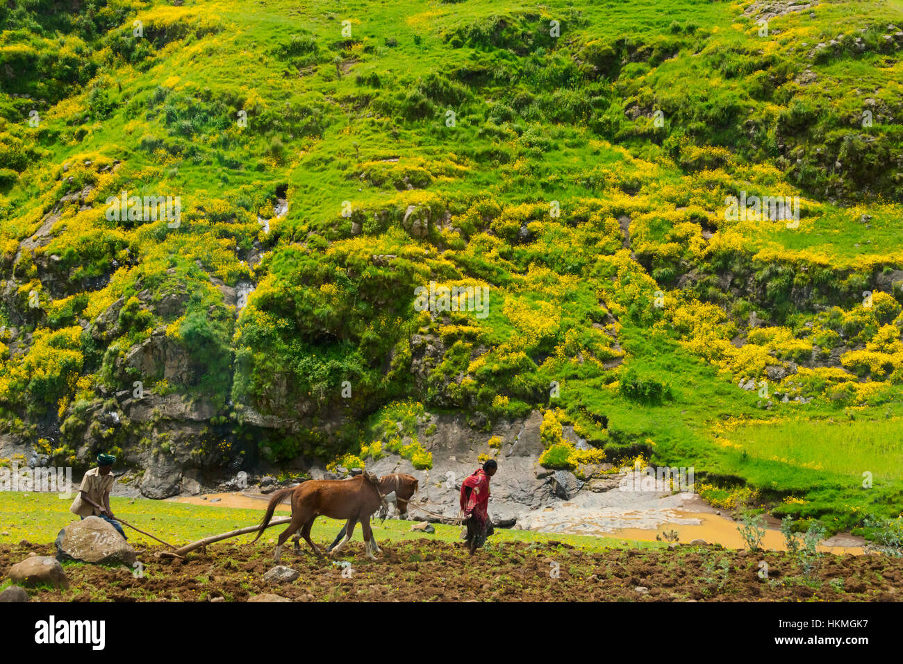 Farmer ploughing with horse in Simien Mountain, Ethiopia - Stock Image