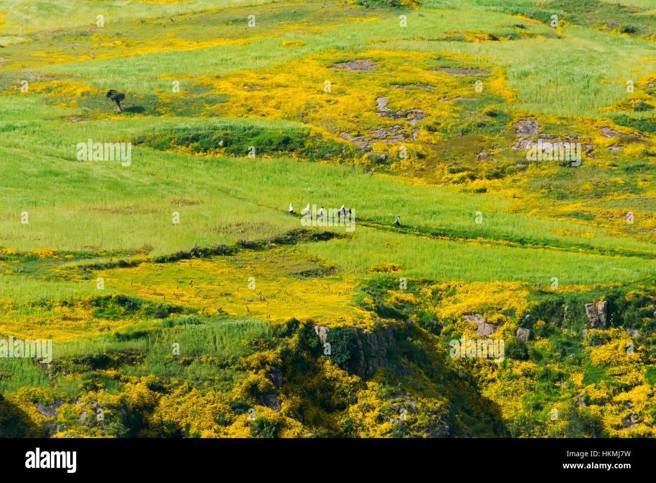 Farmland in Simien Mountain, Ethiopia - Stock Image