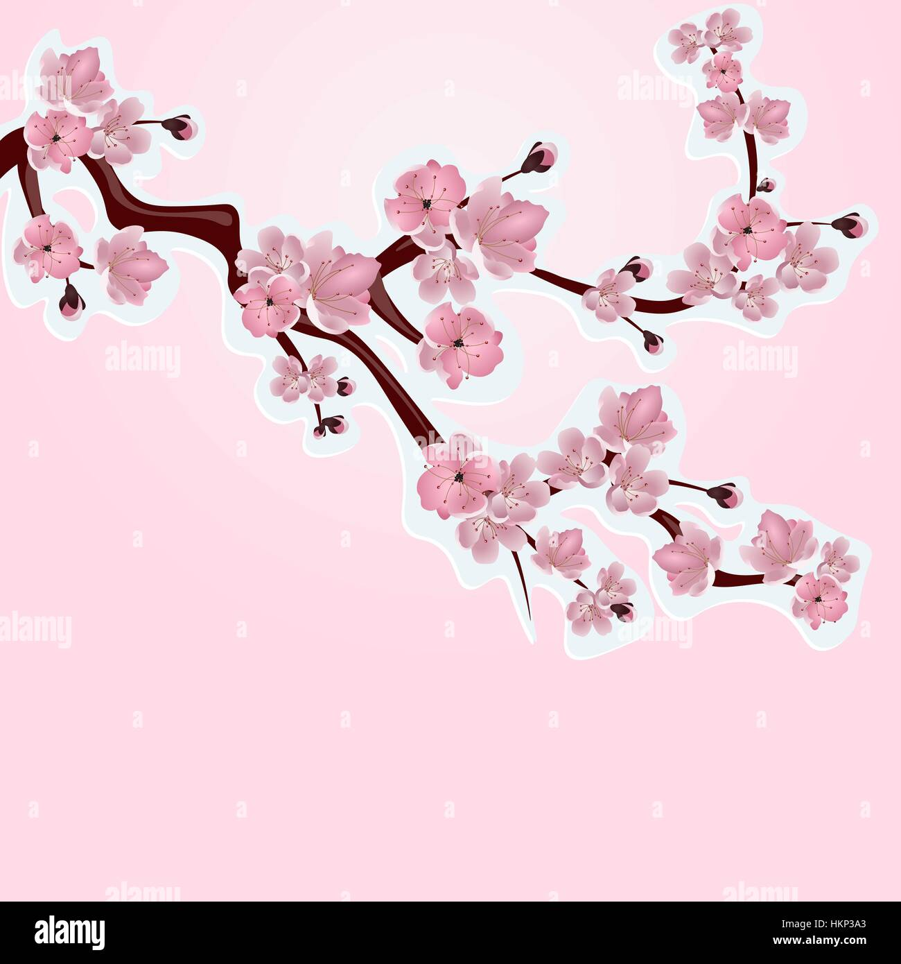 Japanese Cherry Blossom Cut Out Stock Photos Japanese Cherry