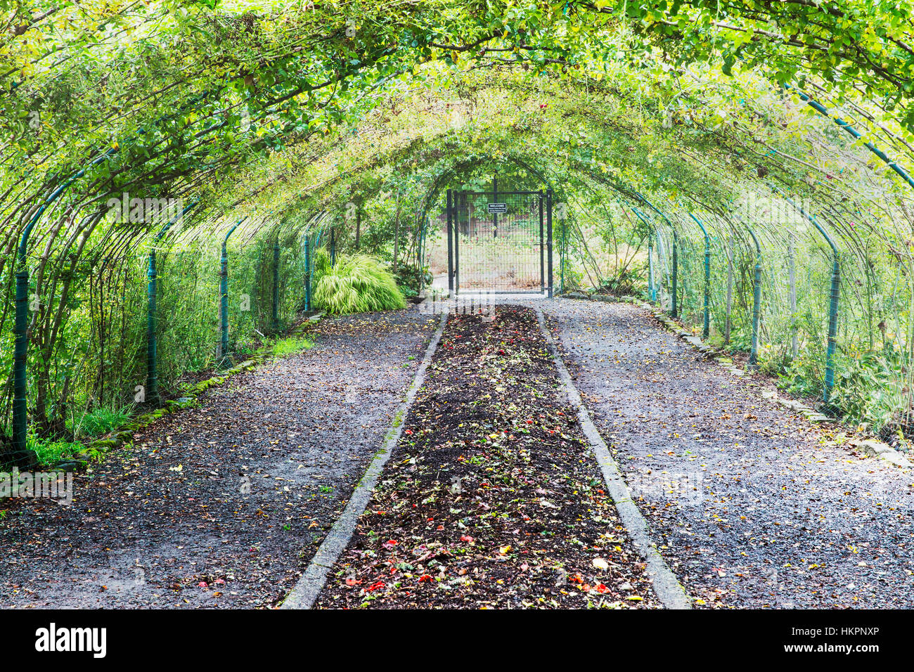 Arbor over fall garden beds.   Point Defiance Park, Tacoma, WA boasts wonderful gardens including rose gardens, - Stock Image