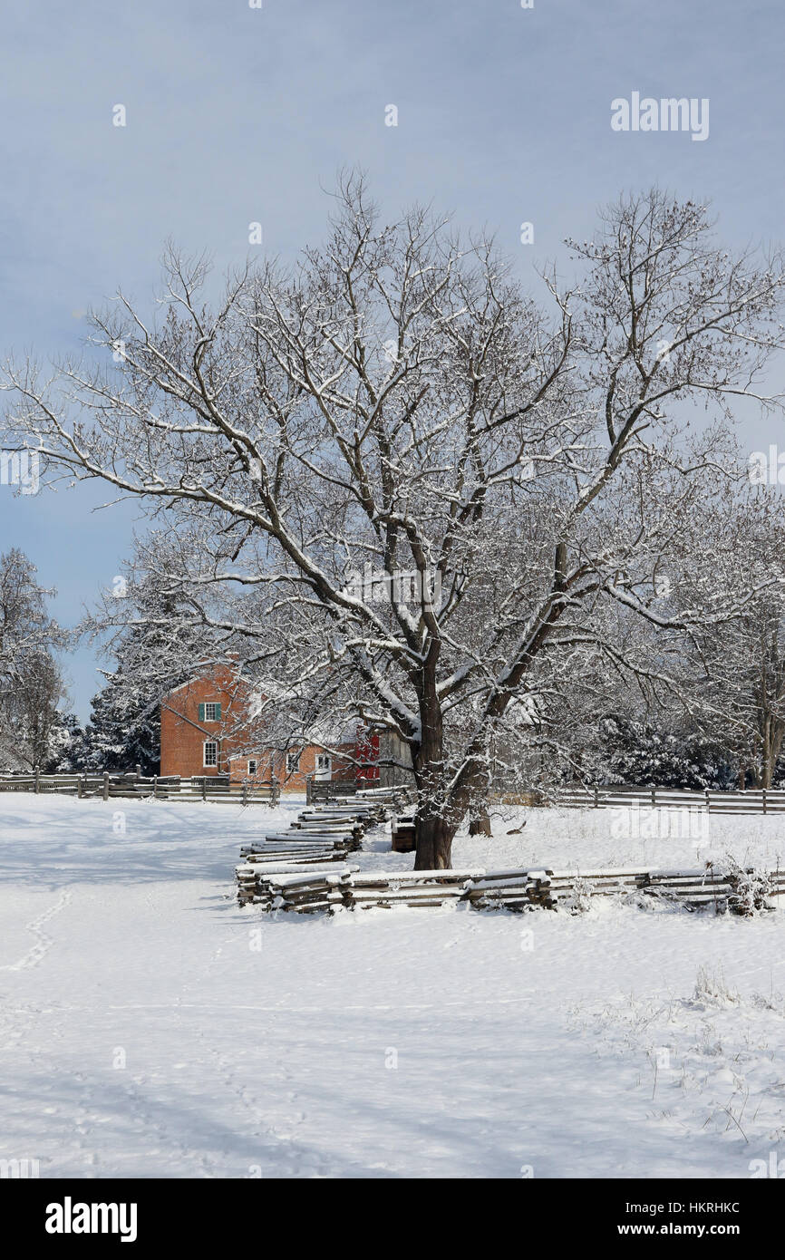 Winter tree near Daniel Arnold House in Winter. At Daniel Arnold Historical Farm, Carriage Hill Metropark, Huber - Stock Image