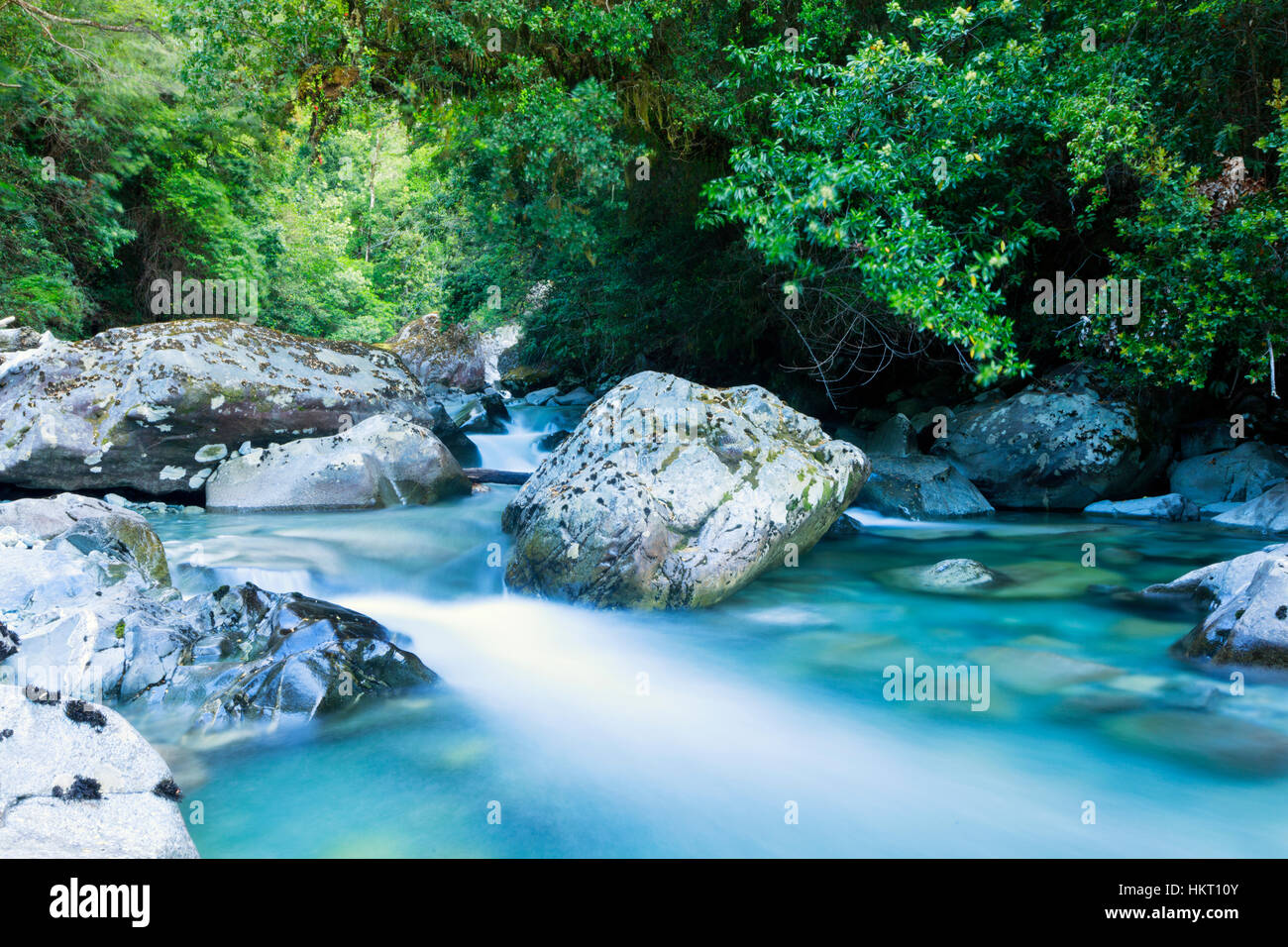 Mountain stream and Valdivian temperate rainforest in the Tagua Tagua reserve in northern Patagonia, Chile - Stock Image