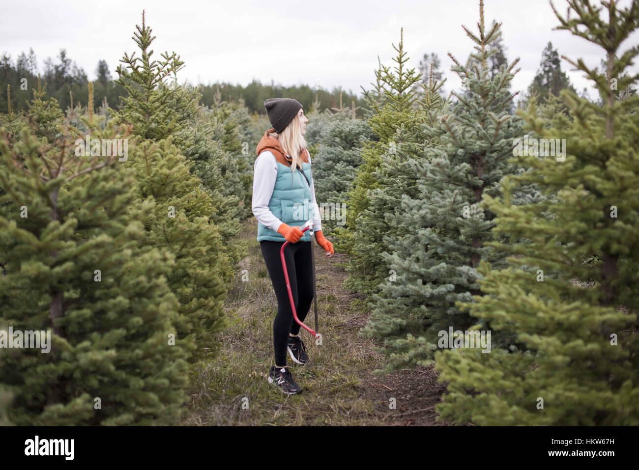 Newman Christmas Trees.Spokane Washington Usa 25th Nov 2016 Courtney Conklin