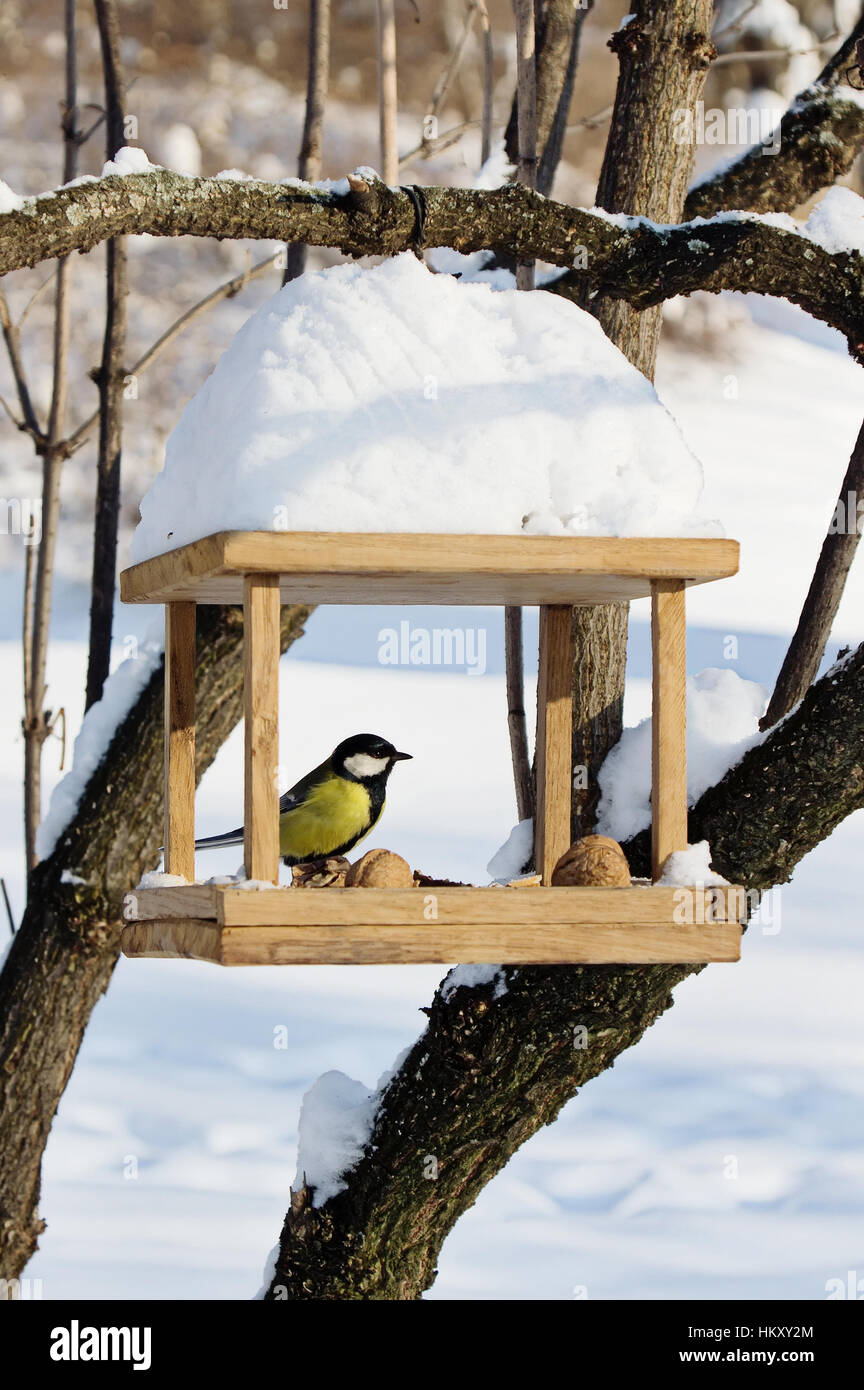 Chickadees (Paridae) is sitting on handmade bird-feeder with crumbs and nuts,  winter scene - Stock Image