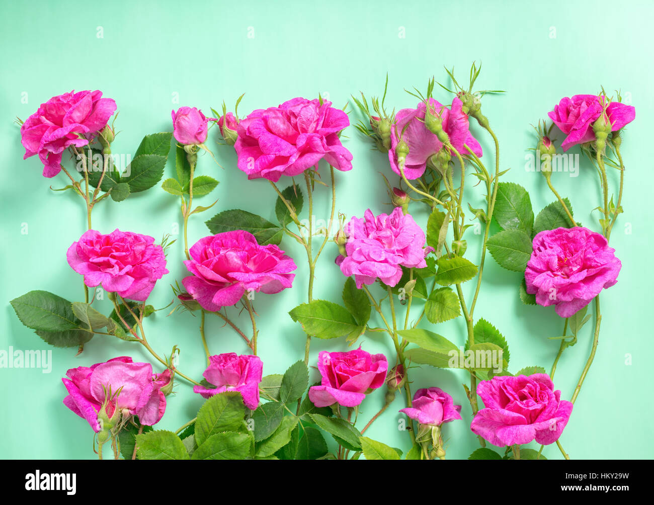 Beautiful Romantic Pink Rose Flowers With Buds And Leaves On Green