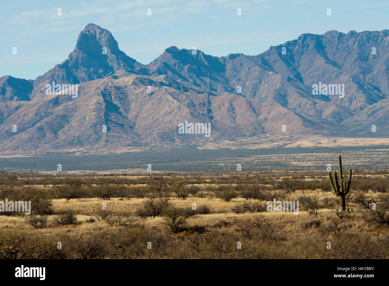 Plains before the center of the world mountain of the Tohono Oodham Indian Nation with a Lone Saguaro cactus in - Stock Image