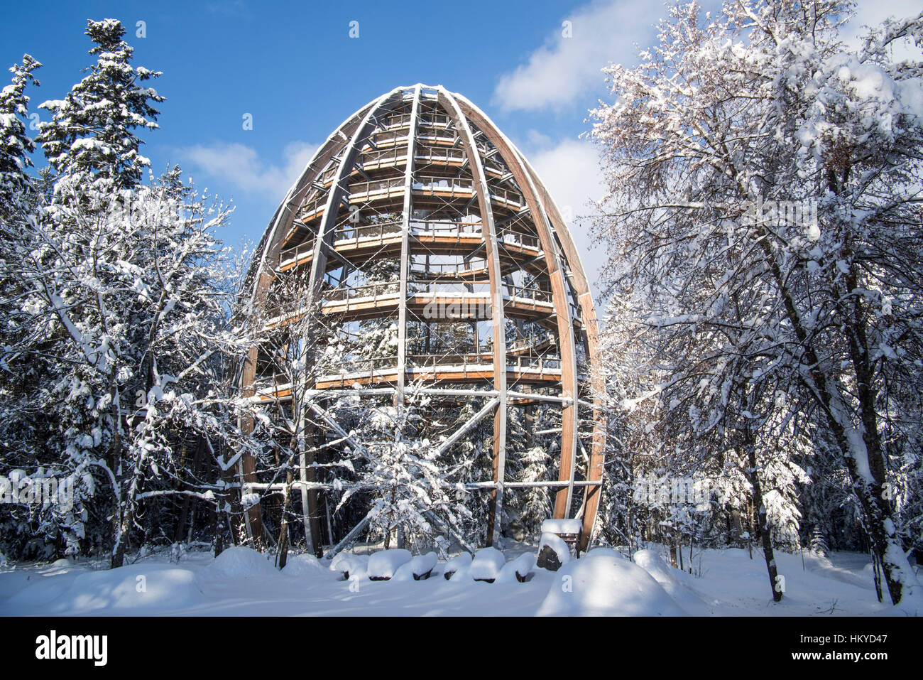 Baumwipfelpfad in winter, wooden tower construction of the world´s longest tree top walk in the Bavarian Forest Stock Photo