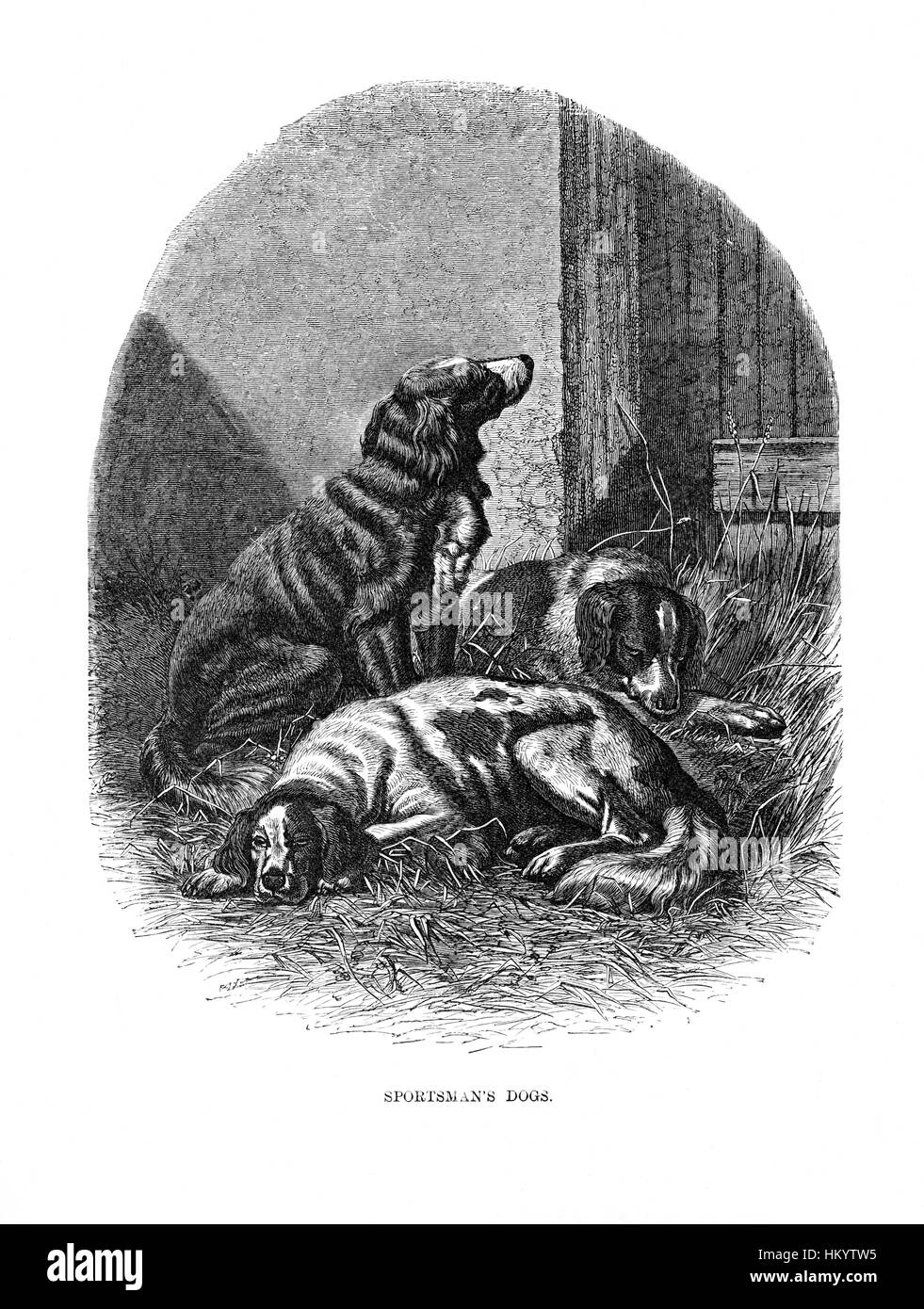 Sportsman's Dogs. 19th century Engraving from 'Popular Natural History' published in 1866. - Stock Image