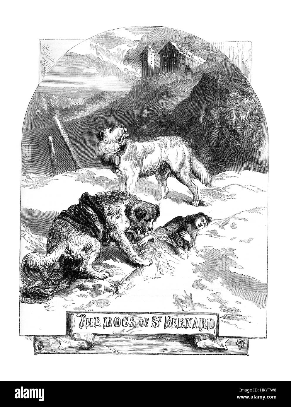 St. Bernard Dog. 19th century Engraving from 'Popular Natural History' published in 1866. - Stock Image