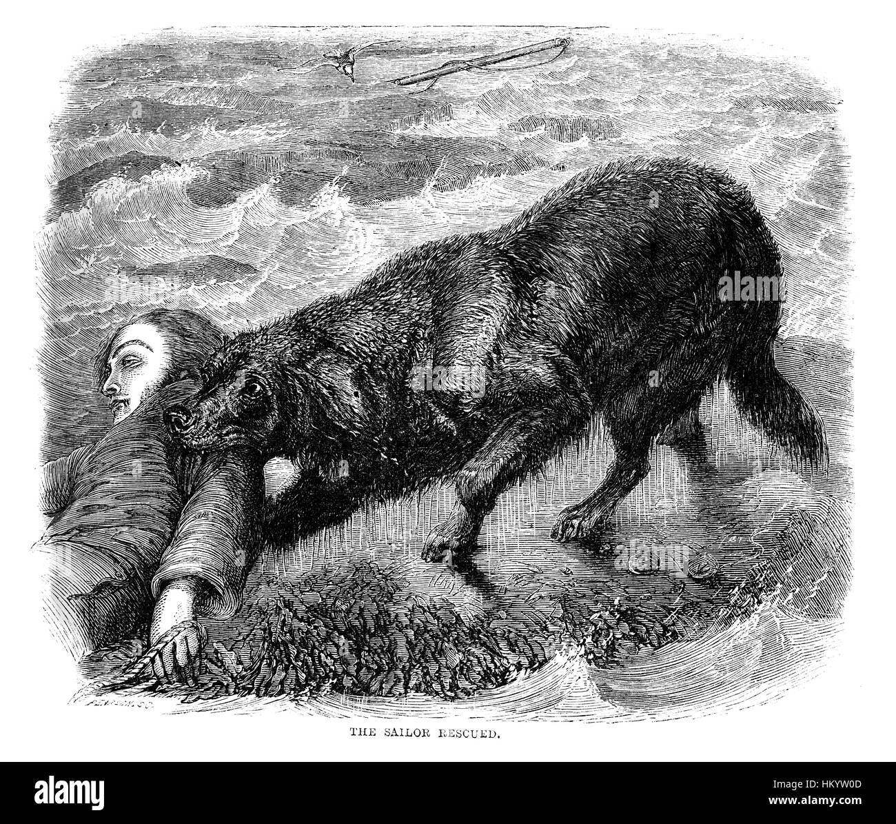 Dog. 19th century Engraving from 'Popular Natural History' published in 1866. - Stock Image