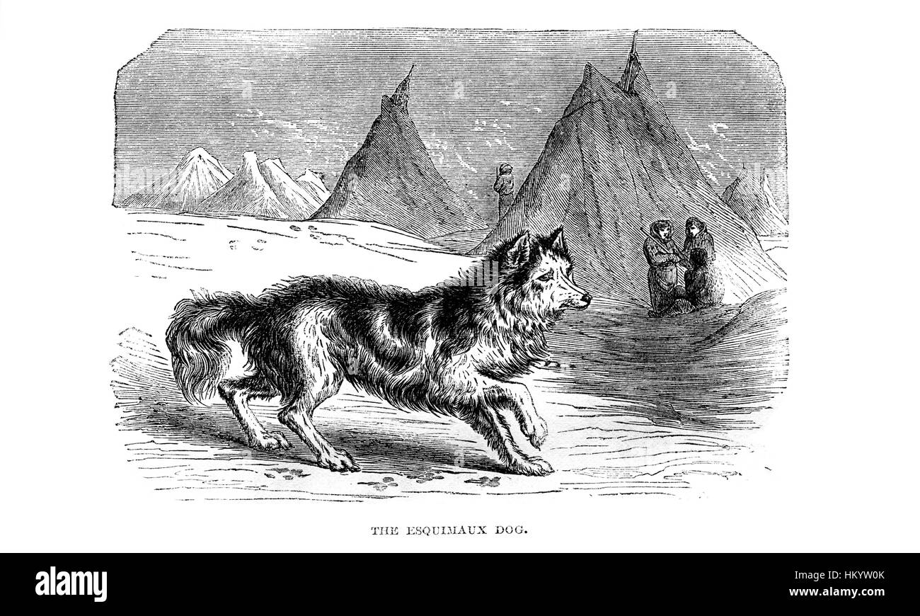 The Esquimeaux Dog. 19th century Engraving from 'Popular Natural History' published in 1866. - Stock Image