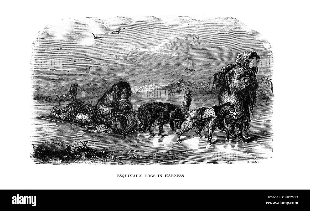 Esquimaux Dogs in Harness. 19th century Engraving from 'Popular Natural History' published in 1866. - Stock Image