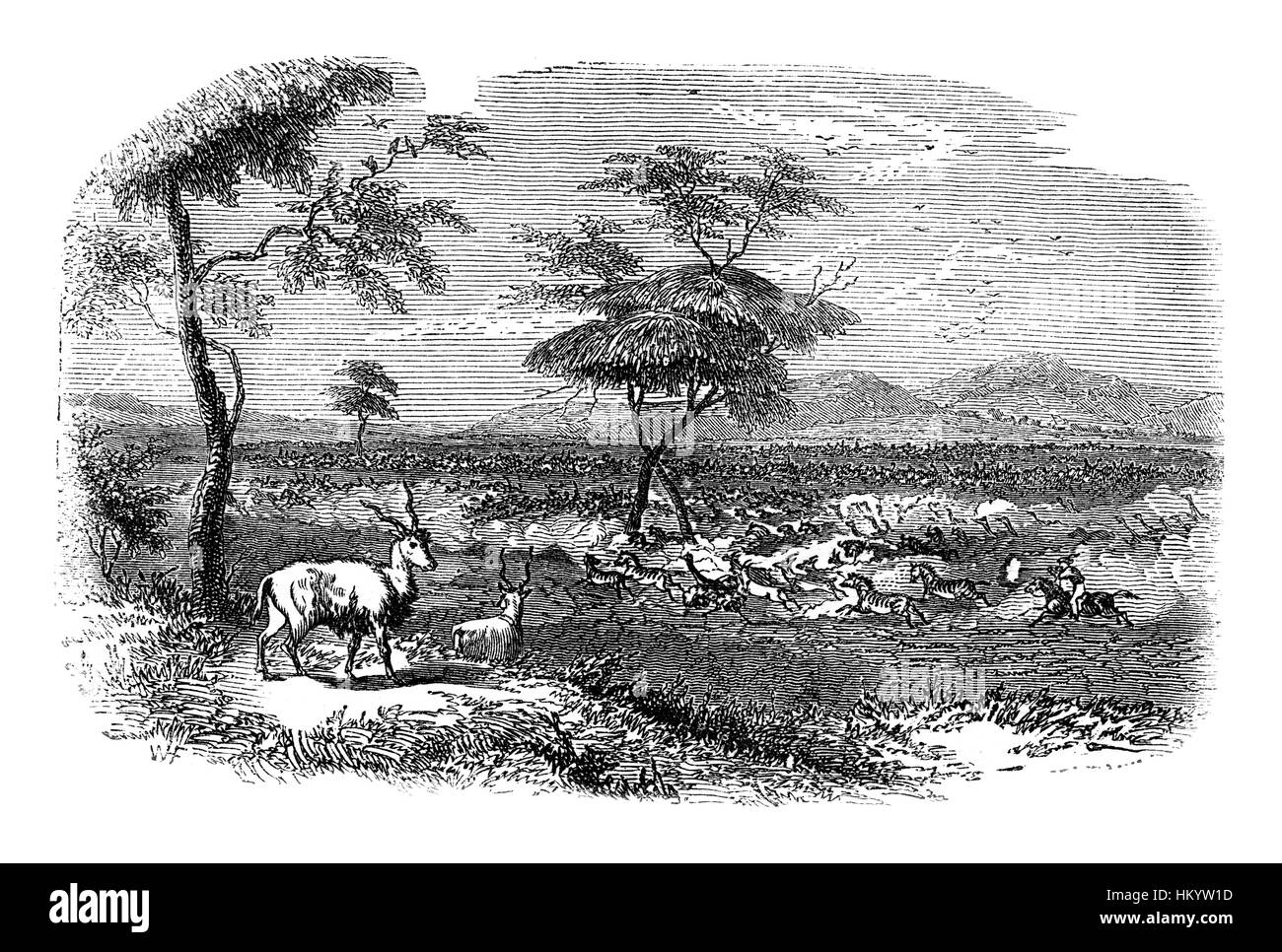 African landscape with animals. 19th century Engraving from 'Popular Natural History' published in 1866. - Stock Image