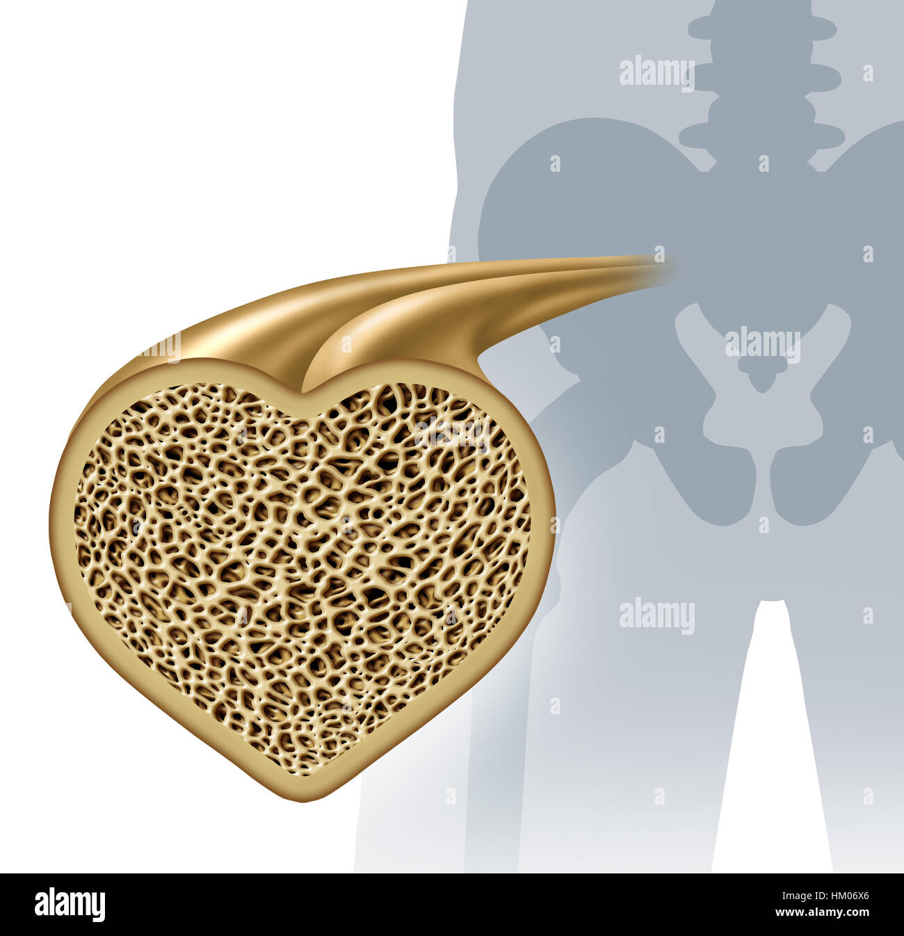 Bone health and osteoperosis prevention concept as a healthy anatomy in a heart shape as a strong normal spongy - Stock Image