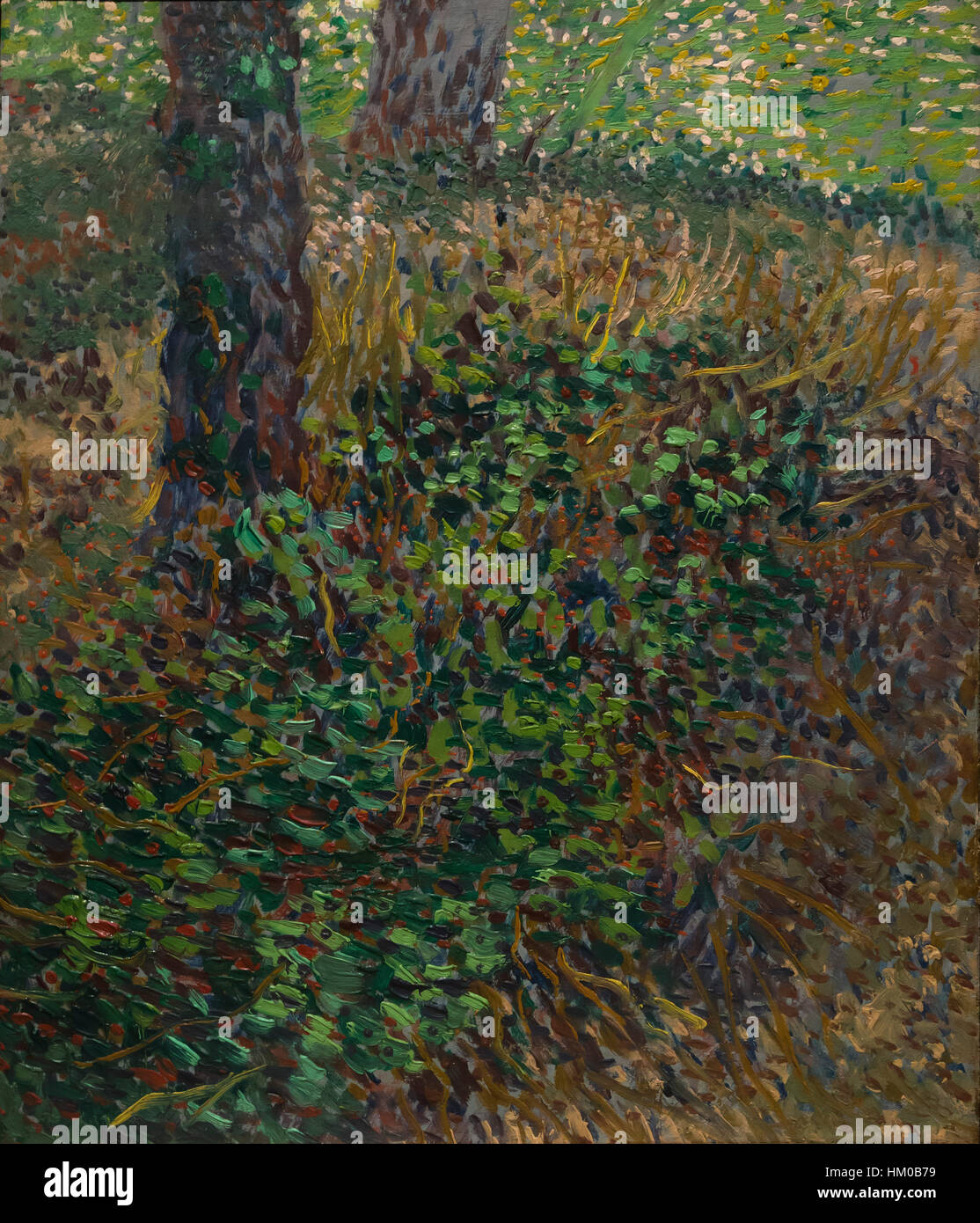 Undergrowth, by Vincent van Gogh, 1887, oil on canvas, Rijksmuseum, Amsterdam, Netherlands, Europe, Stock Photo