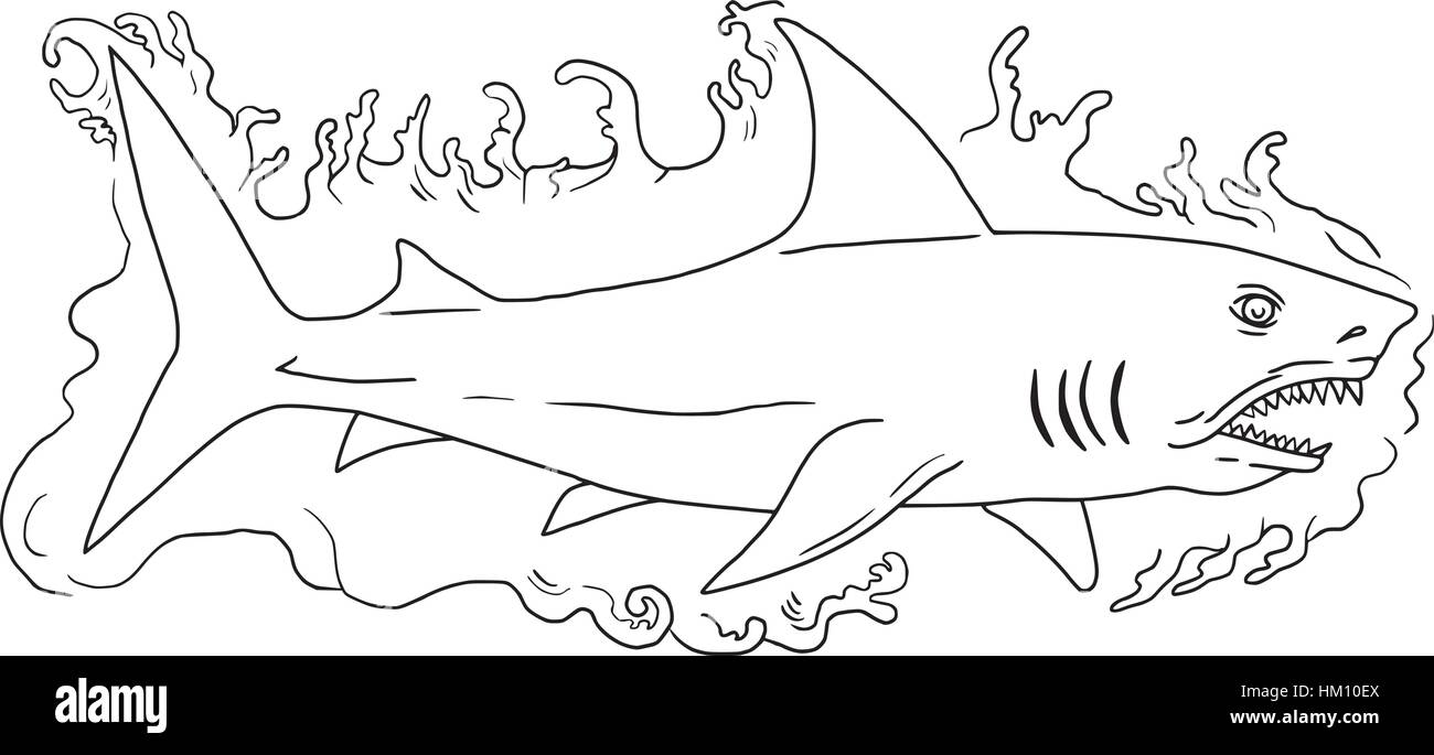 Drawing sketch style illustration of a shark swimming in water viewed from the side set on isolated white background. - Stock Vector