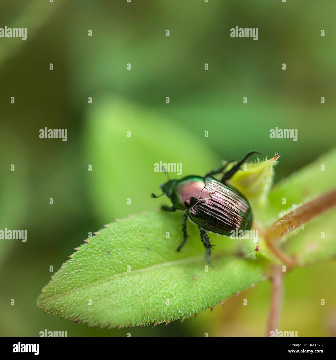 insects world ! Stock Photo